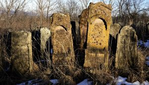 Lichens and mosses on Jewish headstones